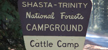 Cattle Camp