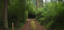 South Whidbey Island State Park
