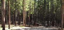 Lost Cabin – Bighorn National Forest